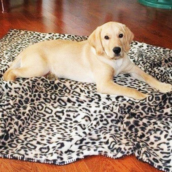 Luxury Fleece Pet Blanket from eFizzle