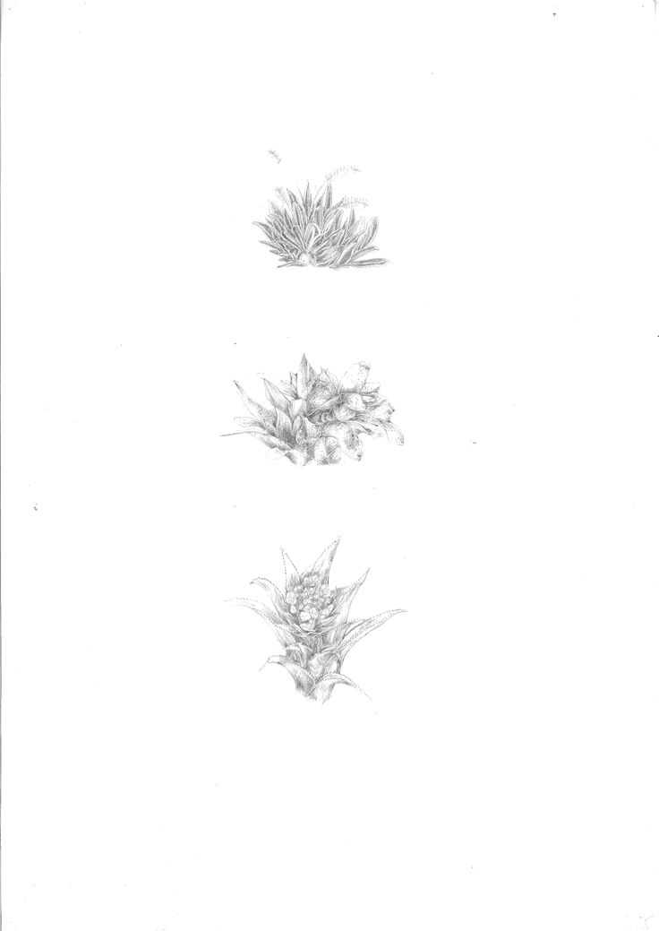 Site Analysis: Drawing of plants found on the site