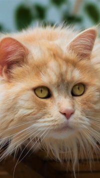 New Animal Cat Cats Mo A Animal Cat Cats Mo Animal Cat Cats Mobile Wallpaper