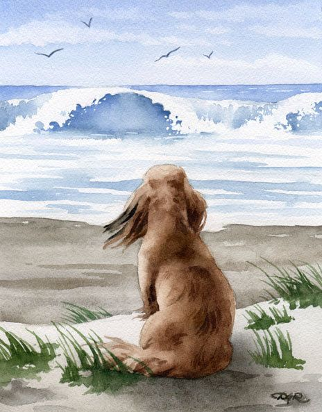 Long Haired Dachshund At The Beach Dog Art Print Signed by Artist D J Rogers