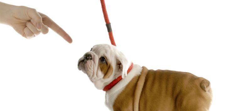 Principales bases de la psicología canina - http://www.mundoperros.es/principales-bases-la-psicologia-canina/