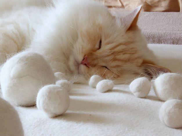 Perte poils chats : versez quelques cuillères d'huile de colza sur les croquettes. L'huile de colza est apparemment la meilleure pour la santé de votre animal. C'est bon pour la peau, les ongles et poils, et ça n'entraîne pas de prise de poids Source : Comment-Economiser.fr | http://www.comment-economiser.fr/perte-poil-chien-conseil.html