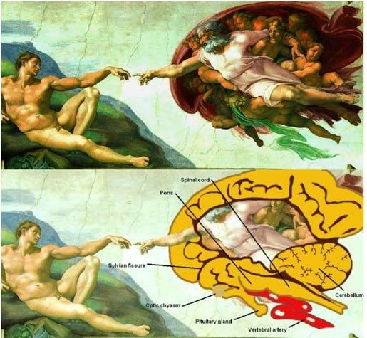 IS THIS MICHELANGELO'S HIDDEN MESSAGE? ~ RiseEarth  Pretty much everyone is familiar with the 'Creation of Adam', even if they might not know that it is a section of a fresco painted by Michelangelo for the ceiling of the Sistine Chapel in the Vatican. Like the Mona Lisa, the picture is so commonly parodied and depicted on T-shirts and postcards as to have become a piece of kitsch. However, what almost everyone has missed is the hidden message that Micheloangelo inserted: ...