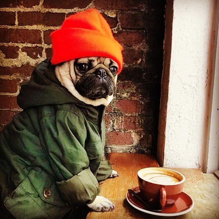 смешные фото животных с кофе великолепные