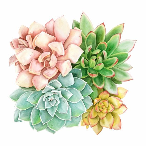 Succulent art print made from original watercolor painting of blush pink, gold, teal, and dark green succulent assortment