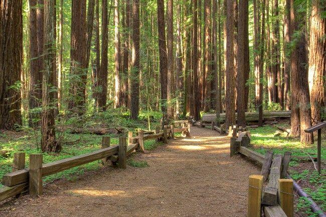 Sonoma Road Trip - Santa Rosa to Bodega Bay - California Beaches