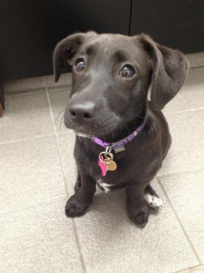 Cute Dog Puppy Eyes