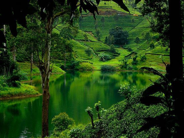 sri lanka- green paradise