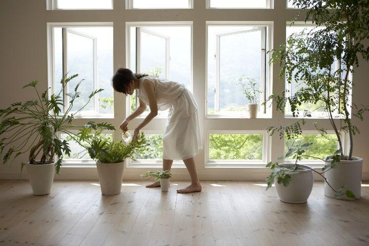 purify indoor air with plants