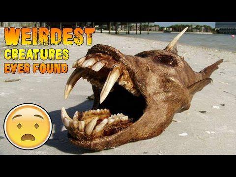5 Weirdest Creatures Ever Found