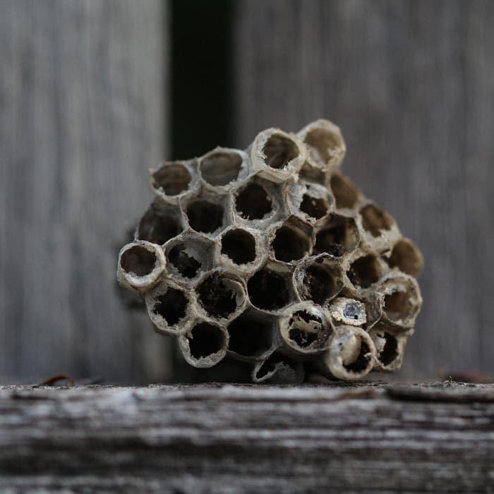 12e6bcc52f98535f9462500ce0a3caec - How To Get Rid Of Wasps In A Stone Wall