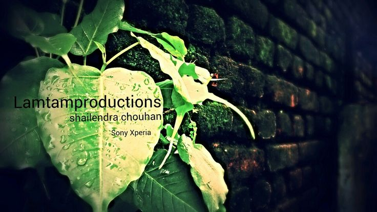 LAMTAMproductions