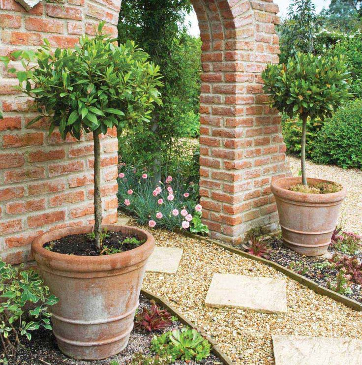 Potted Plants for Patio Use | Tesco Clubcard in association with Thompson & Morgan Tesco Clubcard ...