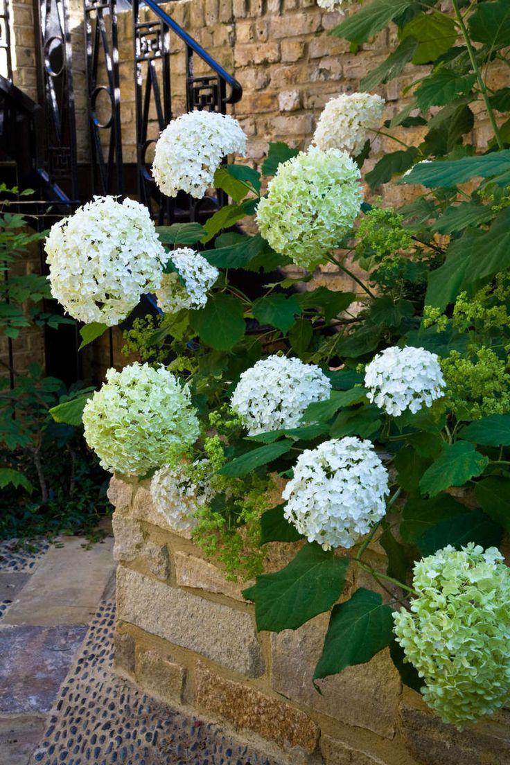 Award winning town house garden in Chelsea designed