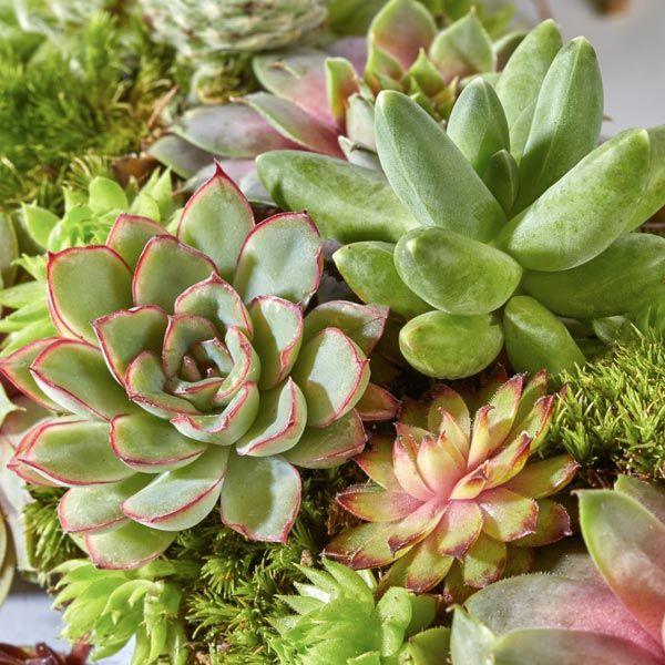 Grafarrangement Krans & Planten