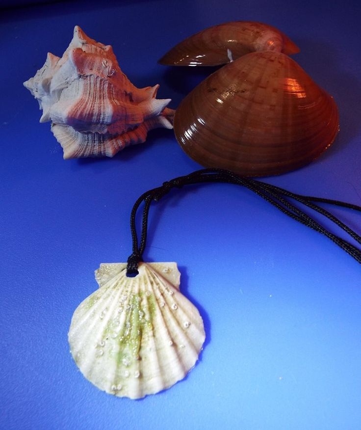 Real handmade scallop seashell with shades of sea green and white.