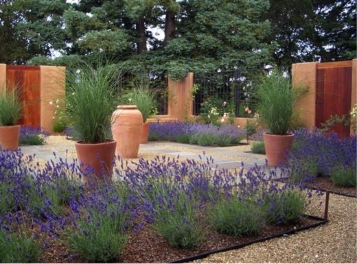 Garden Ideas, Landscaping Ideas, Drought Tolerant plants, Full sun plants, Lavender, Ornamental Grasses, Terracota pots, Contemporary Courtyard, lavandula Thumbelina Leigh, Miscanthus Gracillimus, lavandula Angustifolia Thumbelina Leigh, lavender Thumbeli
