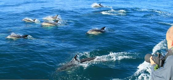 Sightings Whale and dolphin watching boat trips