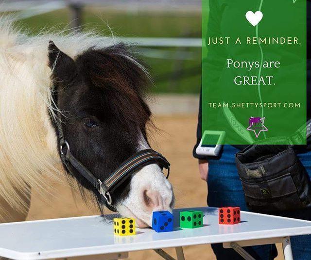 Ponys Grossartig Just A Reminder Ponys Are Great Ich Bin Immer Wieder Erstaunt Wie Oft Ponys Allen Vor Pferdeliebe Training Ideen Kleines Pferd