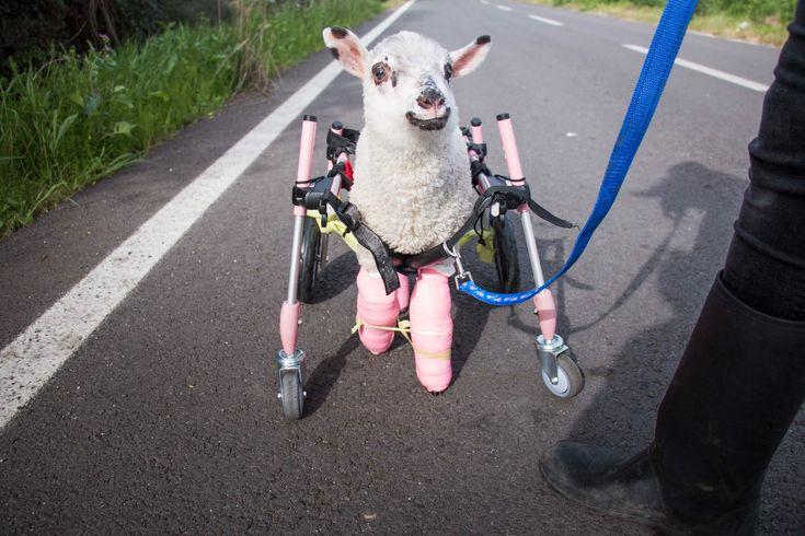 En su paseo dando pequeños pasitos con su carrito Pam llenaba todo a su alrededor de magia y esperanza  https://t.co/bGaGxvy2ug
