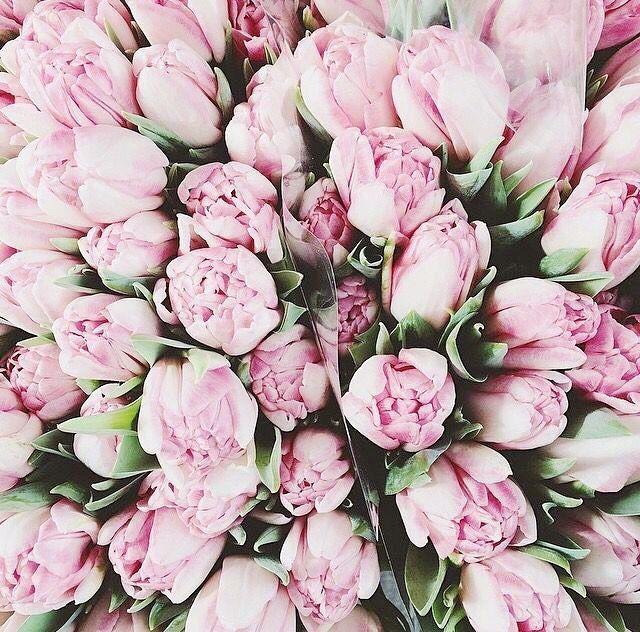 Bellamummablooms Peonies Pink Love Bellamumma