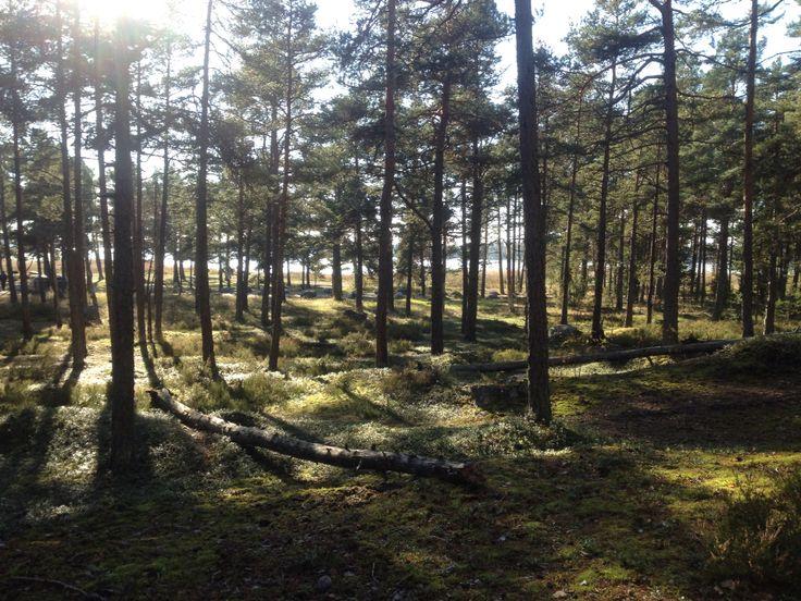 Rannikko-metsä