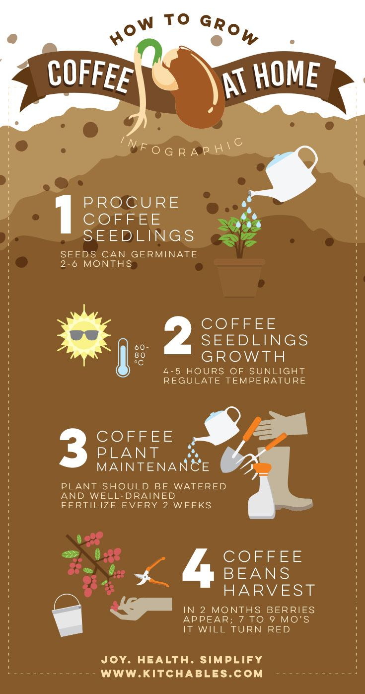 how to grow coffee beans in minecraft
