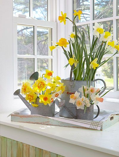 Daffodils arranged in watering cans make a charming spring bouquet.