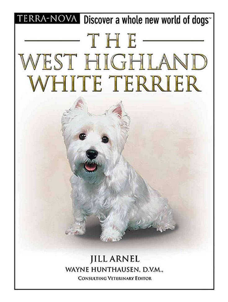The West Highland White Terrier Overstock Com Shopping The