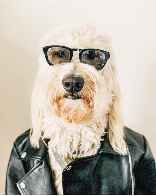 Who Says You Can T Pull Of That Leather Jacket Clealrly Anyone Can Forrest And Jameson Urban Dog Dog Solution Forrest