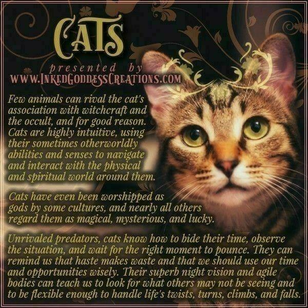 Katzen Spirituell