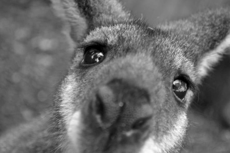 Photo competition: Australiana  Entry from: Jonah Scotti  Image title:   Digital camera: SLR digital camera Nikon d3100, F-5.6, Shutter-1/125, Iso- 100, Focal length-55mm