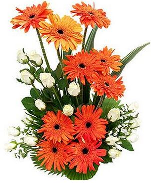 Brighten your near and dear ones' day with cheerful Gerbera flowers! Be a birthday, congratulations or any other occasions, these flowers are well suited. Buy a beautiful Gerbera basket from our online flower shop!