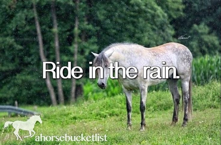 It makes that wet horse smell