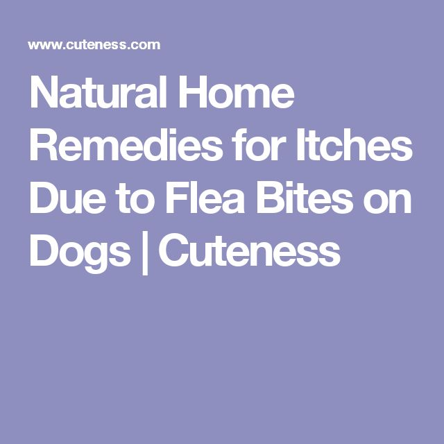 Natural Home Remedies for Itches Due to Flea Bites on Dogs | Cuteness