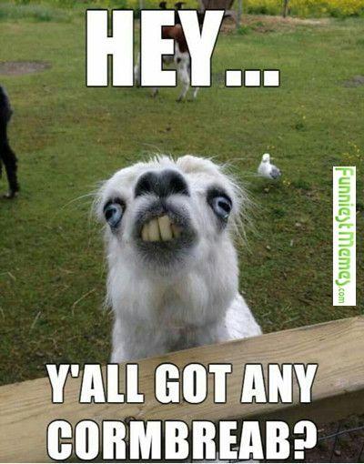 FunniestMemes.com • Hey! Ya'll Got Any Cormbread...