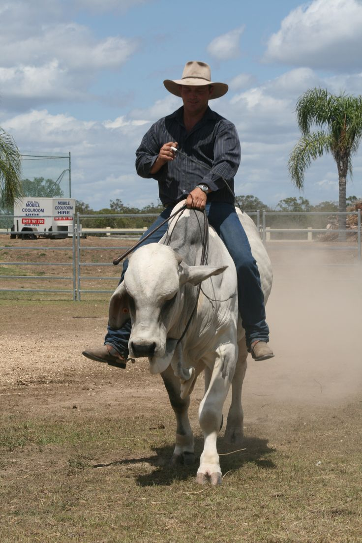 horseman that rides bulls also