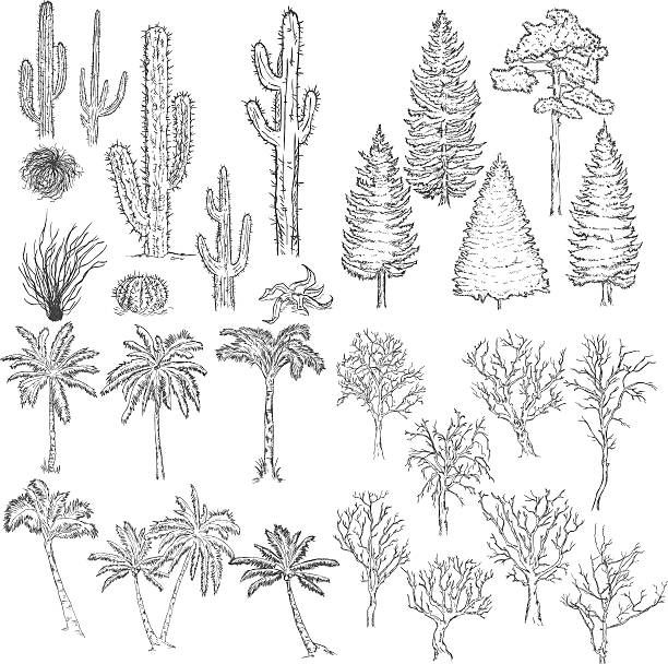 Vector Big Set Of Sketch Trees And Plants Cacti Tumbleweed Pine Vector Art Illustration Free Vector Art Vector Art