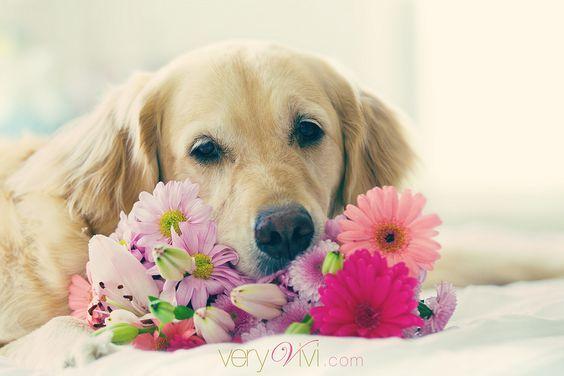 Mejores 33 imágenes de Animals en Pinterest | Mascotas, Animales y ...