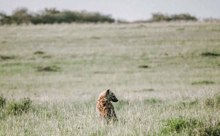 We wish you a peaceful Monday 💙 📷: @martin_molnes on Instagram #safari #inthebush #HappyMonday