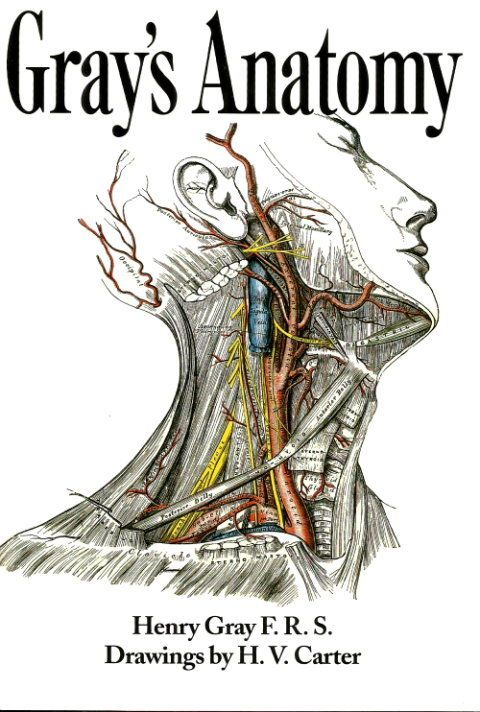 Anatomy Descriptive And Surgical By Henry Gray The Drawings By