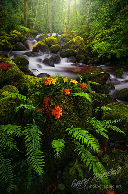 A Light Upon The Color by Gary Randall on Flickr. At Boulder Creek in Autumn. Brightwood, Oregon.