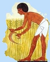 Facsimile of a tomb painting illustrating the barley harvest. 18th dynasty, ancient Egypt.