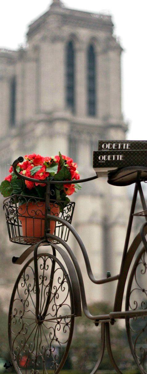 Notre Dame de Paris, #France