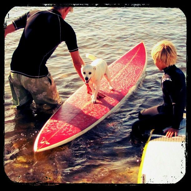 Even our dog loves surfing #longbeach #outerkomm #capetown by girl_with_cam