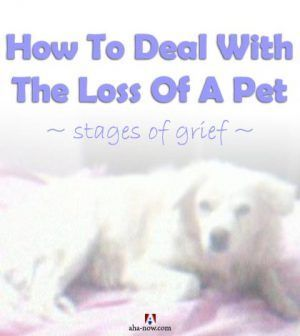 We lost our pet dog Snoopy recently. It was a heartbreaking experience. Though we learned to cope and reconcile, which is an ongoing process, Vinay and I want to share our experiences, feelings, thoughts, and resources with you. If you're a pet lover or owner, we feel this post about coping with pet loss may help you and we request you to share your experiences and views so others too benefit from them. More at the blog..