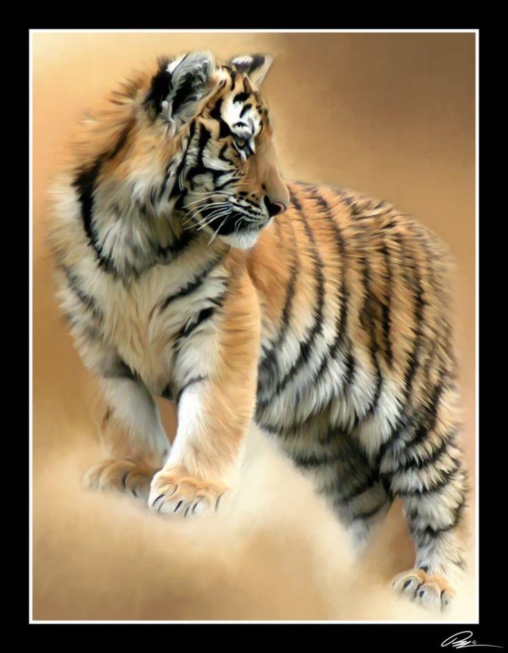 Big Cats Tiger Pictures