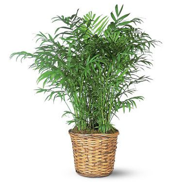 Image detail for -large indoor floor plant our indoor floor plants add a touch of ...