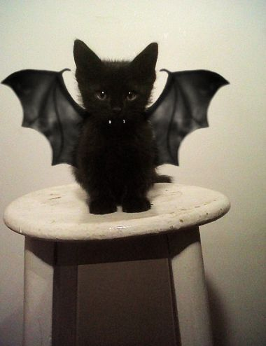 Bat kitty.. HappyHalloween!