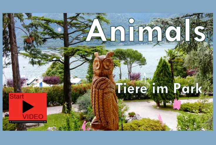#VIDEO >>> We´re not only a dog friendly Lifestyle Beach Resort ( http://www.parco-san-marco.com/en/lifestyle-beach-resort/the-hotel/holiday-with-your-dog/ ), we love all animals that live in our park. So the little children discover the fish and the turtles or a lizard and the two donkeys enthusiastically. Certainly, always also a carrot for the donkey feeding can be found at breakfast.